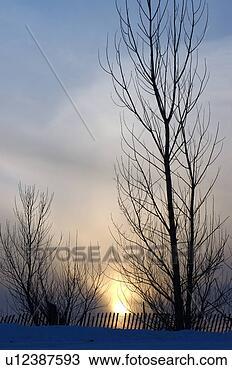 Banco de Imagem - inverno,  pôr  do sol,  através,   árvores,  snowfence.  fotosearch - busca  de fotos, imagens  e clipart