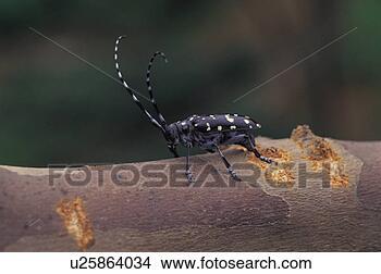 蠕虫, 节肢动物