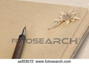 Banco de Imagem - Edelweiss, flor, em, livro, (Leontopodium, alpinum). Fotosearch - Busca de Fotografias, Impressões, Imagens, e Fotos Clip Art