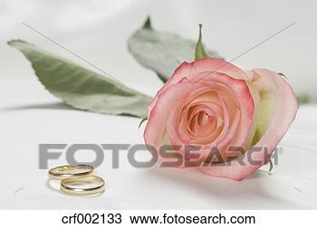 stock foto hochzeit ringe mit rosenbl te wei hintergrund nahaufnahme crf002133 suche. Black Bedroom Furniture Sets. Home Design Ideas