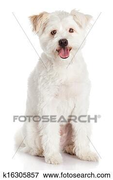 狗便便颜色