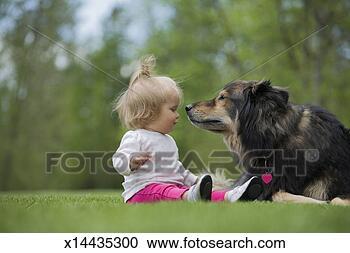 动物交叉配狗与猫