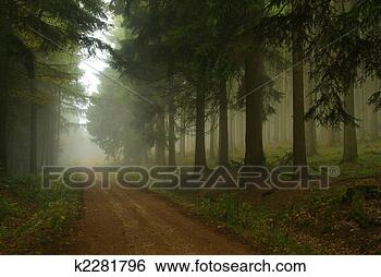 Stock Photo - forest in fog 18. fotosearch - search stock photos, pictures, wall murals, images, and photo clipart
