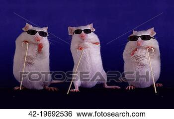 Stock Photo - three blind mice.  fotosearch - search  stock photos,  pictures, images,  and photo clipart