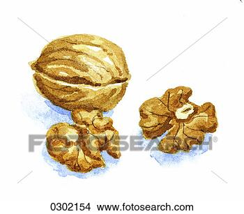 Stock Illustration - food, indoors,  interior, nut,  walnut. fotosearch  - search clipart,  illustration,  drawings and vector  eps graphics images