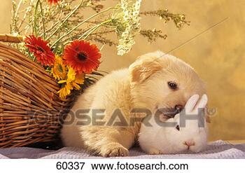 dog-golden-retriever-puppy_~60337.jpg