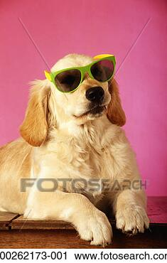 Stock Photography - dog wearing sunglasses,  close-up. fotosearch  - search stock  photos, pictures,  images, and photo  clipart