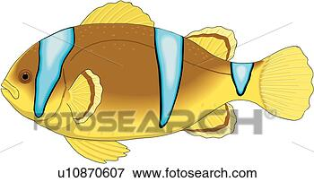 Clip Art - clown fish. fotosearch  - search clipart,  illustration,  drawings and vector  eps graphics images