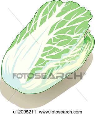 Clipart - food material,  vegetable, cuisine,  food, plant, ingredient,  cabbage. fotosearch  - search clipart,  illustration,  drawings and vector  eps graphics images