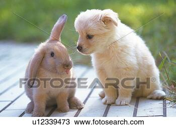puppy-rabbit-standing_~u12339473.jpg
